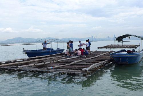 LFS oyster farm.jpg