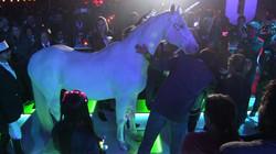 Horse on LED Floor