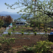 Early stages of a nw garden installation on Whidbey Island.