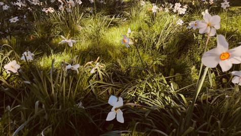 Spring Flowers by Mark Blezard