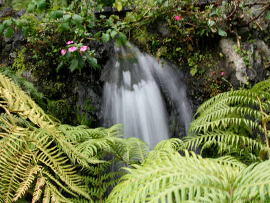 Monte Tropical Gardens when sight seeing in Madeira