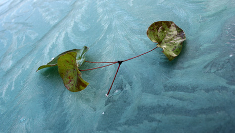 The last leaf of Autumn