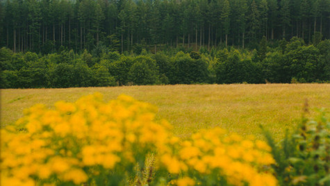 Scottish Fields by Mark Blezard
