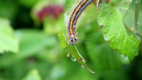 Caterpillar by Mark Blezard