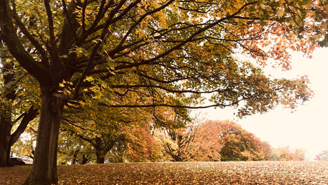 Alexandra Park in Autumn