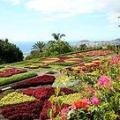 The Botanical Gardens of Madeira