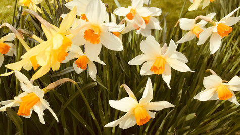 First signal of Spring by Mark Blezard