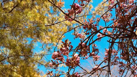 Spring in Henrietta Park