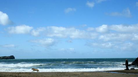 Beach, Man and Dog
