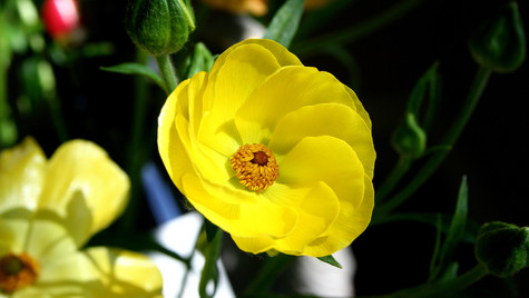The Yellow Flower by Mark Blezard