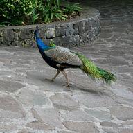 Botanical Gardens in Madeira, Sight seeing