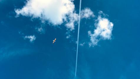 Natural flight and man made flight