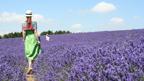 Green Dress and Lavender