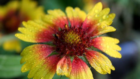 Yellow Flower by Mark Blezard