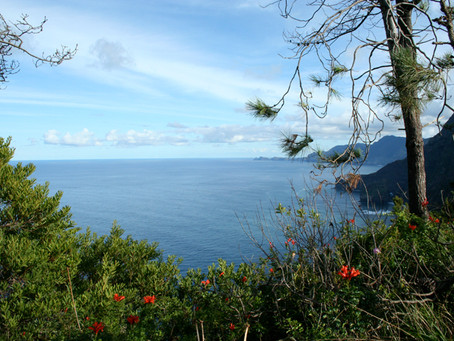 Is Madeira a COVID safe destination? By Mark Blezard