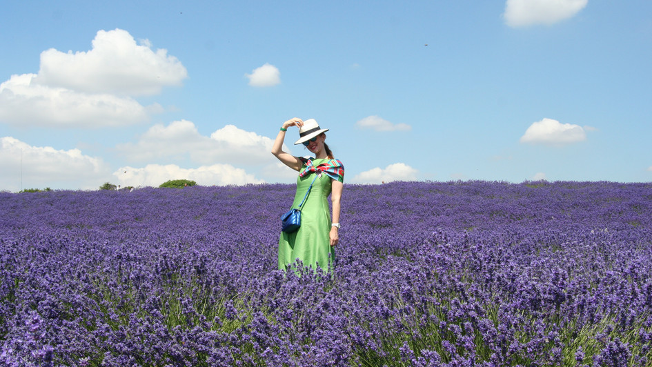 Somerset Lavender Fields