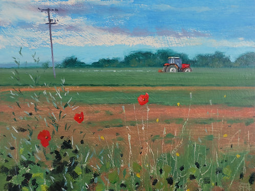 Tractor and Poppies