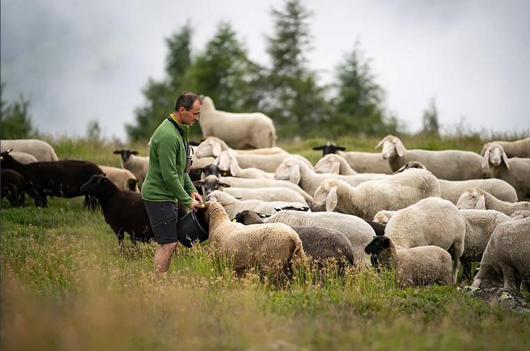 Quelle : Bio Zirbitzlamm Fam. Wernig, Mühlen Foto: Stefan Voitl