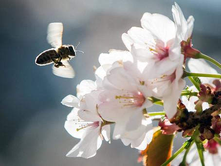 11- picadas de abelhas.