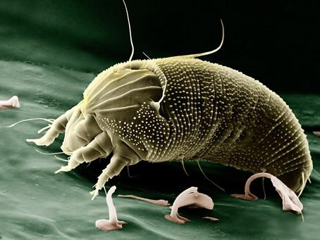 3  Alergia a ácaros