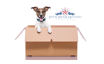 dog in box2.png