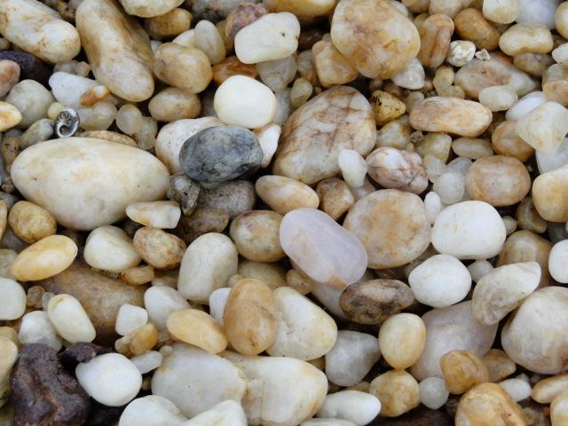 Mangue de Pedra
