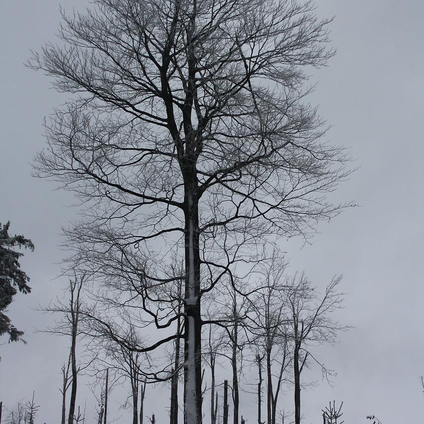 """Výstava fotografií  """"Stromy - průvodci našich cest"""""""