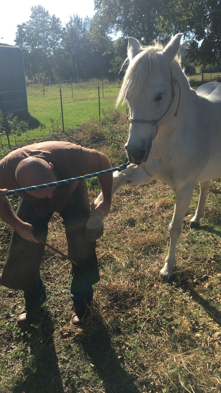 Training an Arab mare