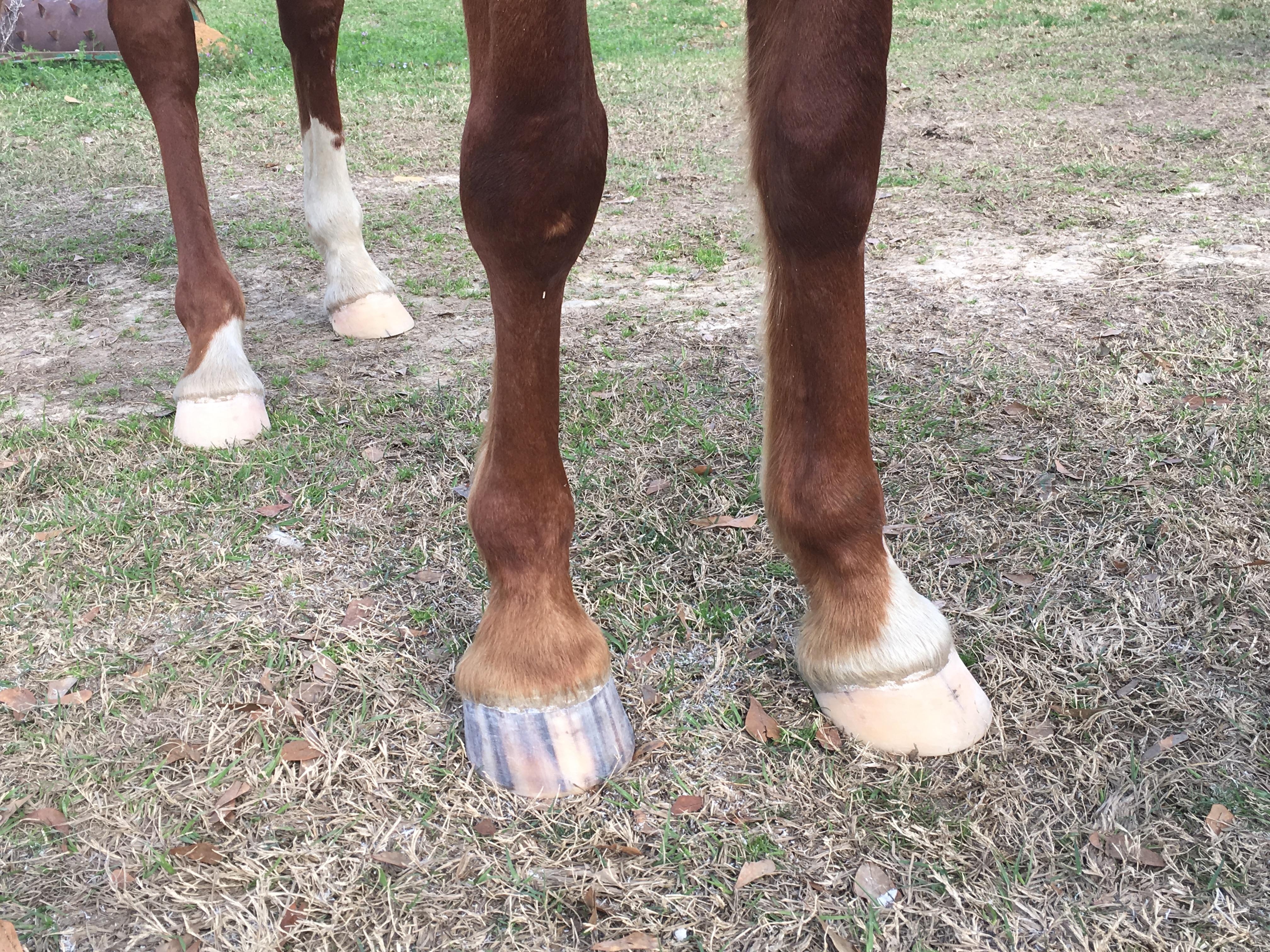 Show Horse Trim