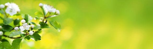 papiers-peints-nature-fleur-banniere-web
