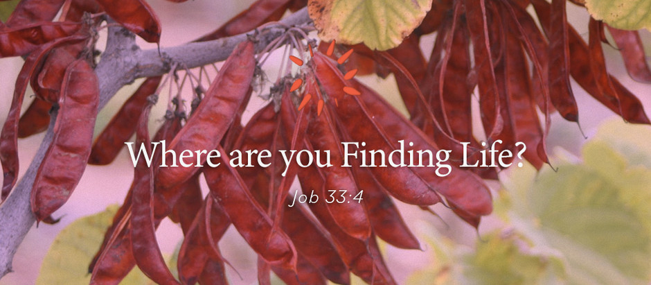 Where are you Finding Life?