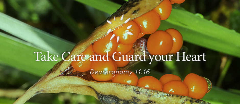 Take Care and Guard your Heart