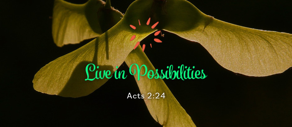 Live in Possibilities