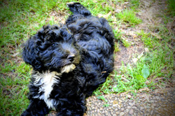Gorgeous Black and White Doodle