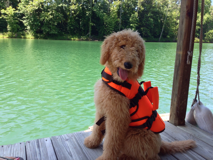 Doodle's day at the lake
