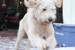 Leo The Doodle!