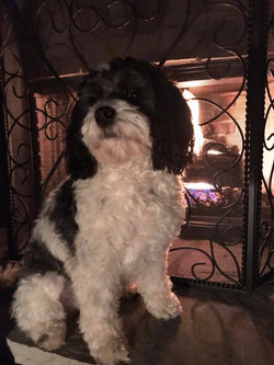 Lily in front of the fire warming up