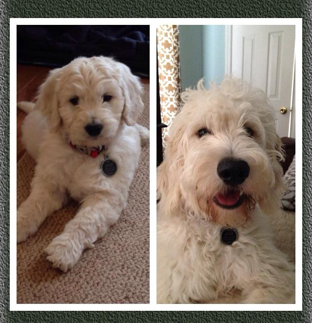 2 months vs. 6 months