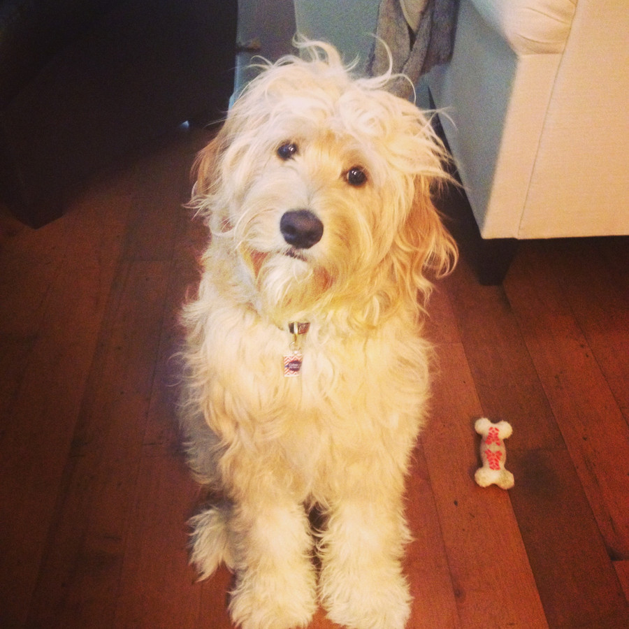 Email from a happy doodle owner