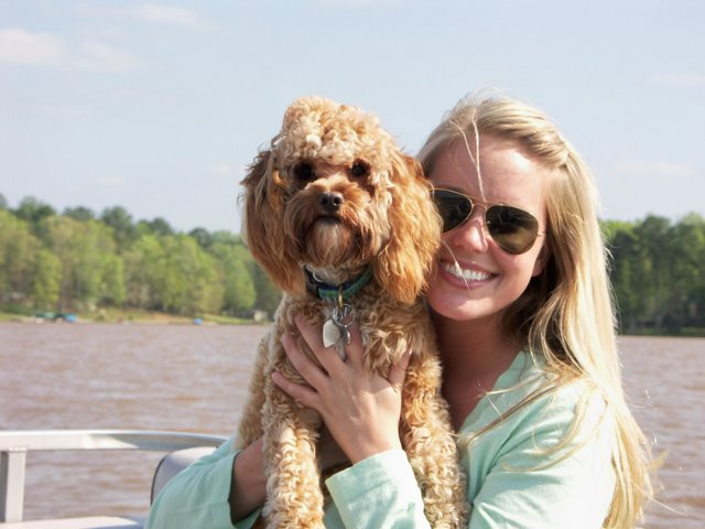Email from a happy cavapoo owner