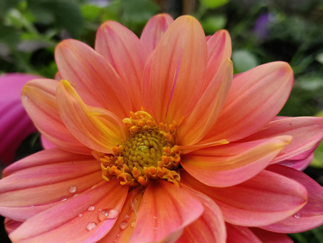 National Gardening Week 2021: Why I Garden