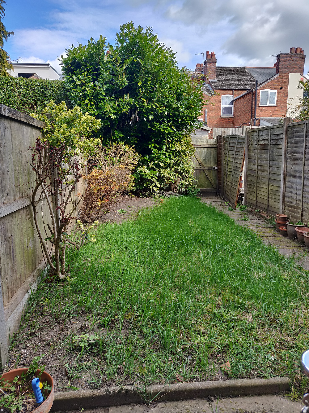 A small patch of lawn with  a fence on one side, 2 shrubs on the other and a large overgrown laurel hedge at the back