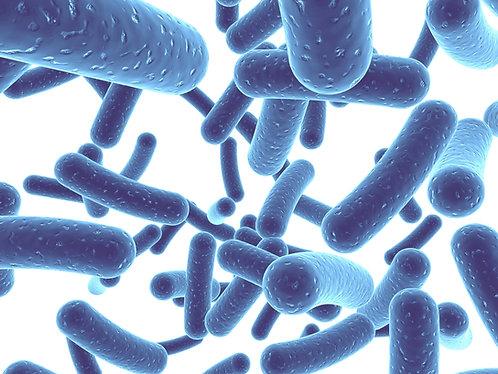 Utilização de Probióticos na Prática Clínica (EAD, Gravado)
