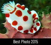 best-photo-2015-ian-shaw.jpg