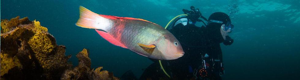 header-reef-life-survey.jpg