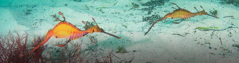 header-marine-conservation.jpg