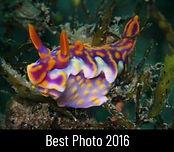 best-photo-2016-duncan-heuer.jpg