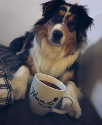 Kundenfoto_Hundemüdetasse_DogSoulmate.jp