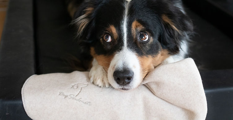 Hundedecke_bio_baumwolle_dogsoulmate_nac