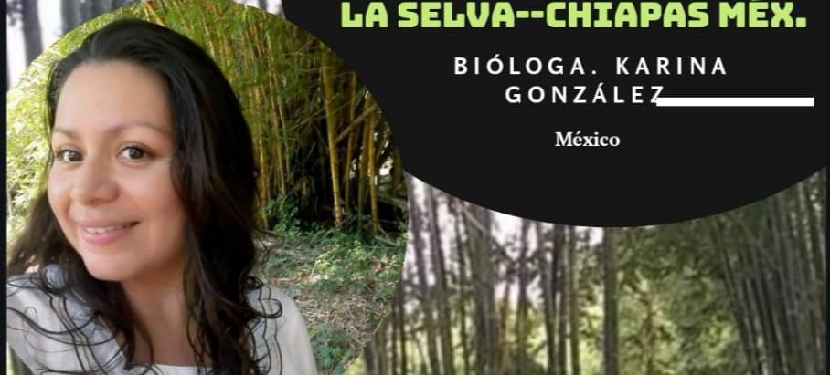 24° experiencia de manejo plantaciones forestales bambú en la selva - Chiapas México.